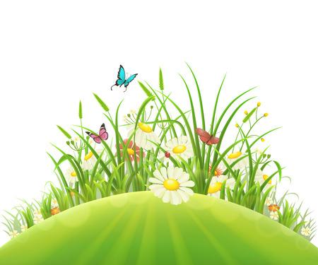 grass flowers: Spring summer hill with green grass, flowers and butterflies