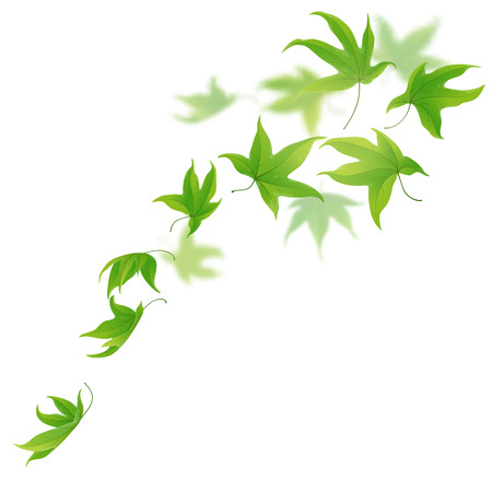 falling: Fresh green leaves falling and spinning on white background