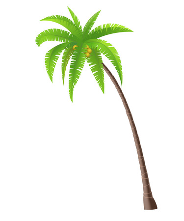 fruit tree: Coconut palm tree on white background, vector illustration Illustration