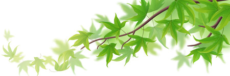 Spring branch with green maple leaves on white