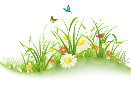 Spring summer meadow with green grass, flowers and butterflies