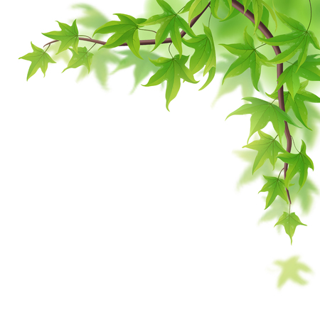 fronds: Fresh spring branch with green maple leaves on white Illustration