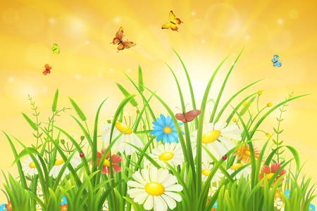 grass flowers: Spring nature background with green grass, flowers and butterflies