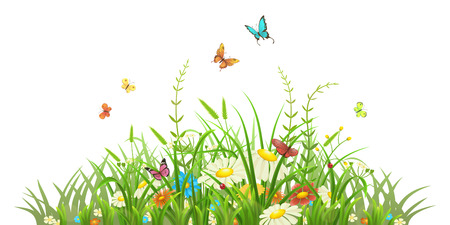 Spring green grass with flowers and butterflies on white background Illustration