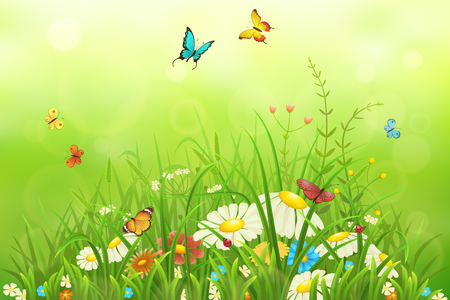 Spring or summer nature background with green grass, flowers and butterflies