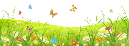Floral summer or spring meadow with green grass, flowers and butterflies