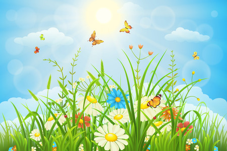 meadow: Summer or spring meadow landscape with flowers, grass and butterflies