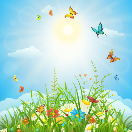 tuft: Spring or summer sunny landscape with green grass, flowers and butterflies