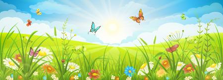Bloemen zomer of lente landschap, weide met bloemen, blauwe lucht en vlinders