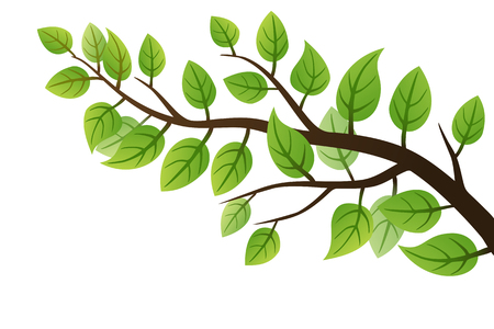 branch: Spring branch with green leaves on white Illustration