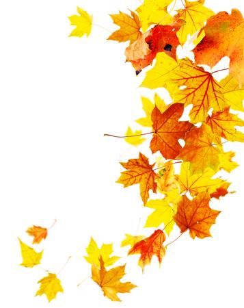 Autumn falling maple leaves isolated on white Stock Photo