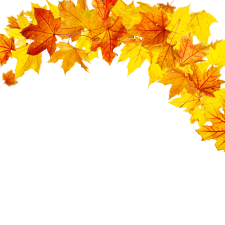 caida libre: Autumn maple leaves falling and spinning isolated on white background Foto de archivo