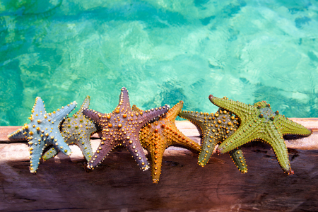wooden color: Color starfishes on wooden boat Stock Photo