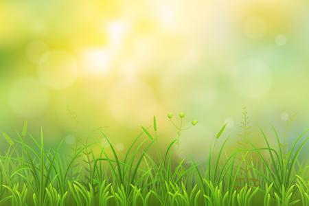 weeds: Spring green grass herbal natural background