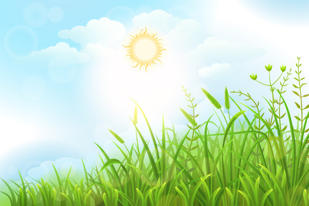 Green grass vector background with sun and sky