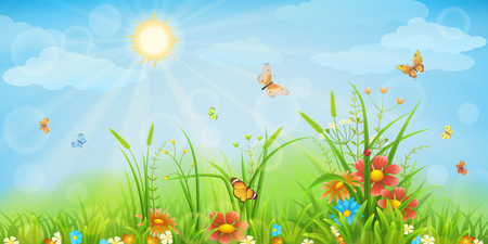 Summer meadow background with green grass, flowers and butterflies