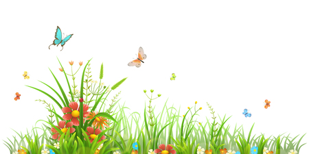 weeds: Summer green grass and flowers Illustration