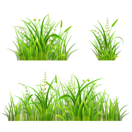 foliage  natural: Set of green grass on white, vector illustration