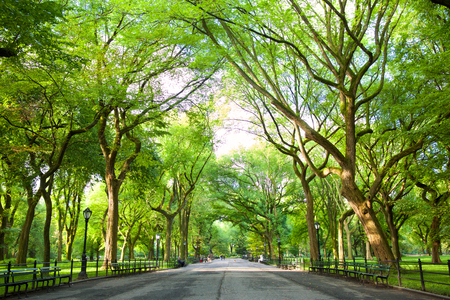 The Mall con American Elms a Central Park, New York