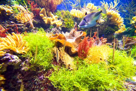 Colorful underwater coral reef with fish