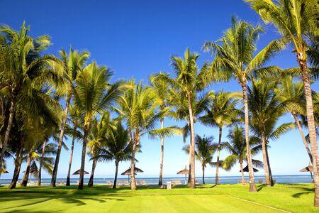 Tropical palm beach in Mauritius Island