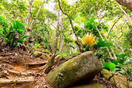 Tropical rain forest and jungle in Seychelles