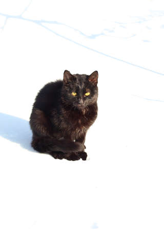 Black cat outside in the snow in winter Stock Photo