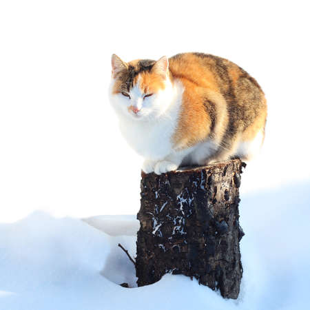 Cat sitting on a stump with snow in winter