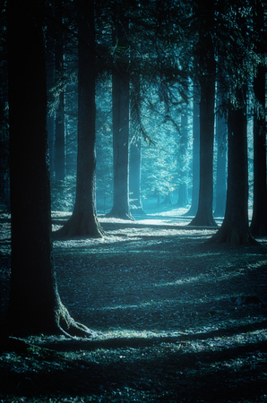 Mystical path trough the woods at moonlight Stock Photo