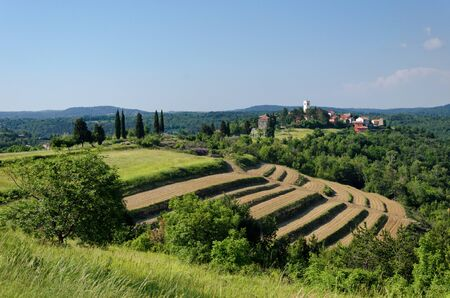 Beautiful rural landscape from Istria / Croatia, with fertile fields and green grass in the foreground, and with the picturesque old town Oprtalj and blue sky in the background; nature wallpaper