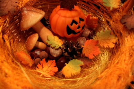 Autumn still life with halloween pumpkins  photo