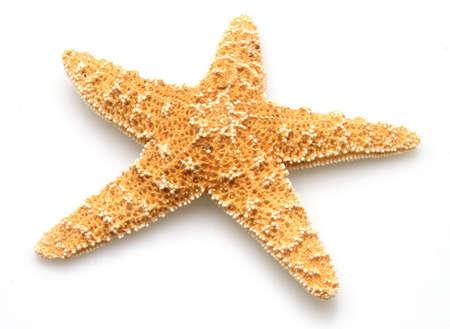estrella de mar: Starfish de los oc�anos de aguas profundas sobre fondo blanco
