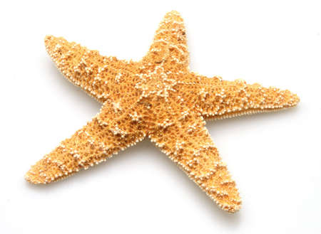 Starfish from oceans deep water on white background Imagens
