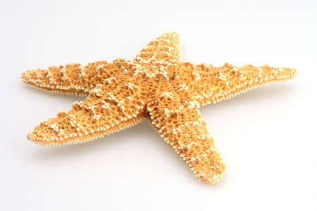 Starfish on white from the deep blue ocean