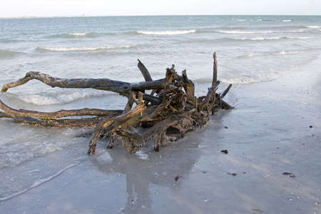 Wood stump off the beach of Sanibel Island