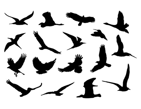 flying birds: collection of birds