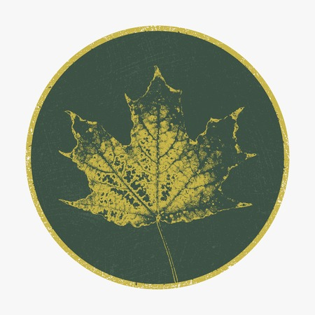 sycamore: Vector background  design  Leaf  Autumn  Illustration