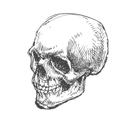 Cartoon Vector Skull . hand drawn