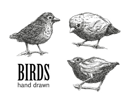 collection of birds.  Vector