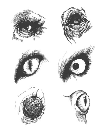 Set of realistic vector animal eyes.  Vector