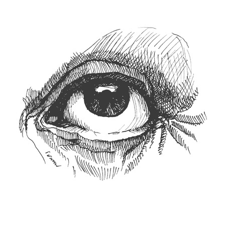 Eye. Realistic vector illustration. Hand drawn. Eps8 Vector