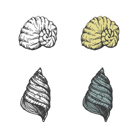 Ensemble de coquillages dessinés à la main. vectoriel eps 8 Banque d'images - 24912354