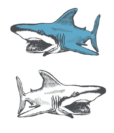 shark cartoon. hand drawn. vector eps 8 Vector