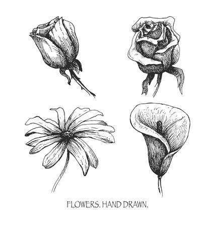 highly: Flower set: highly detailed hand drawn vector.