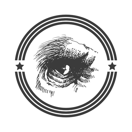 Vector animal eye. Hand drawn. Vector