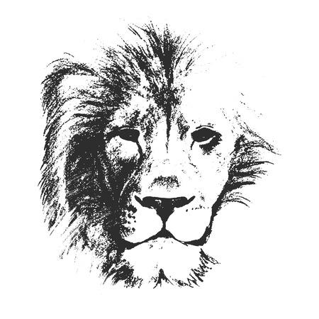 lion drawing: disegno vettoriale stile schizzo di leone maschio viso Vettoriali