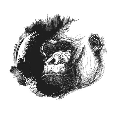 apes: Ape head logo in black and white. Vector illustration Illustration