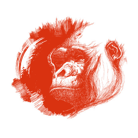 apes: Ape head icon in black and white. Vector illustration
