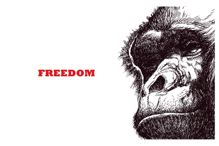 Head gorilla. Hand drawn. Vector illustration
