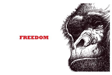 Head gorilla. Hand drawn. Vector illustration